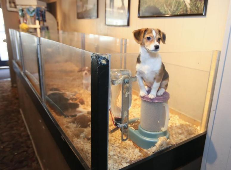 newsengin-16664605_110316-ham-puppies5
